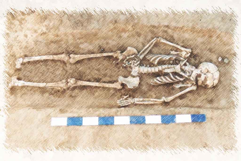 La empresa de arqueología Archeo-On realiza estudios Paleobiológicos (Antropología, Arqueozoología y Arqueobotánica) de una forma rápida y efectiva